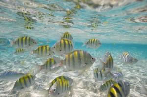 snorkeling at cayo arena, paradise island